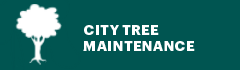city tree maintenance