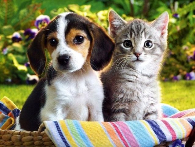 cat and dog 1