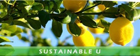 Sustainable.U.Grow.Your.Own.Citrus